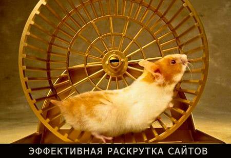 Раскрутка сайтов в Днепропетровске